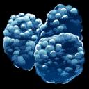 Azulberry Symbol