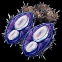Plant Species X Seed Symbol