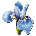 Rare Flower Symbol
